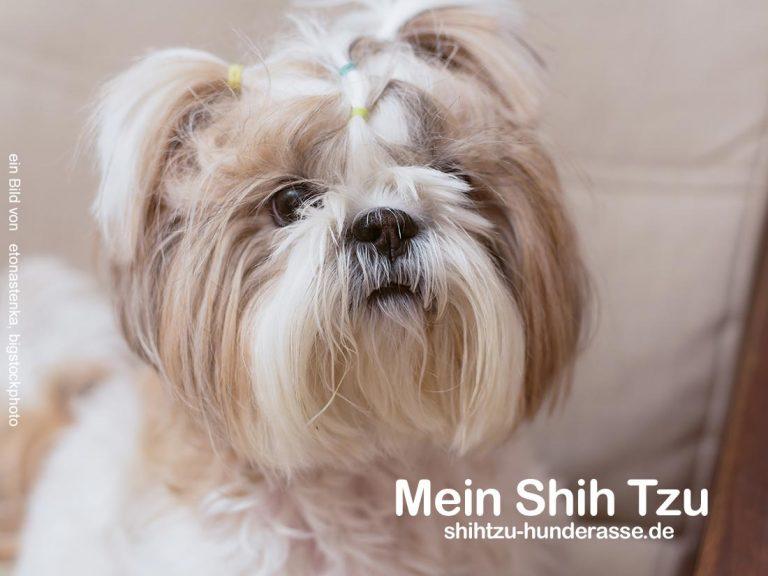 Das beste Shih Tzu Hundefutter – Getreidefrei – Gesund – 90% Fleisch